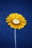 sunflowersoul1